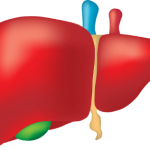 How Liver Health Impacts Your Overall Health and Your Ability to Lose Weight.